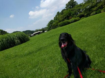 明日香村,奈良県立動物愛護センター