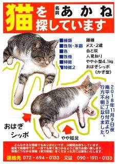 迷い猫探し中(高槻市南平台、2018年11月8日) あかねちゃん