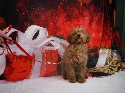 12月22日のパピークラス「社会化!そしてアイコンタクト」子犬のしつけ教室