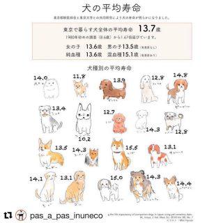 犬の平均寿命「犬種別」!