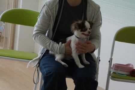 6月のパピークラス①(子犬の社会化)