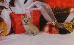 メリークリスマス☆ しつけ教室での撮影風景です♪