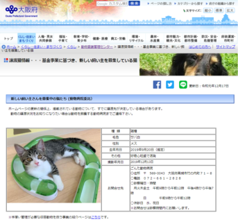 里親募集中です!大阪府子猫事業(大阪府獣医師会)