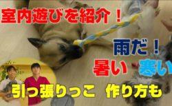 室内遊び(犬)、引っ張りっこ紐、作成