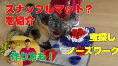 ワンちゃんの室内遊び紹介、スナッフルマットの紹介、作り方も!(ノーズワーク)
