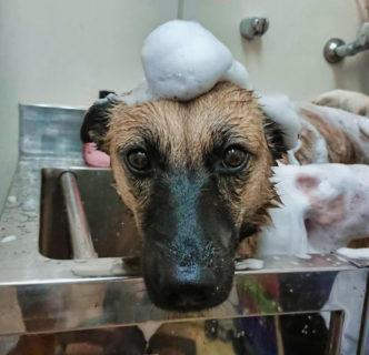 お知らせ9月の予定 パピークラス、獣医師の出勤