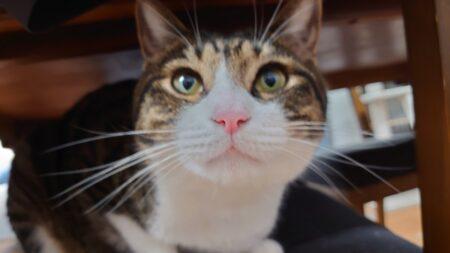 突然ですが、猫の日常の動画を集めています!